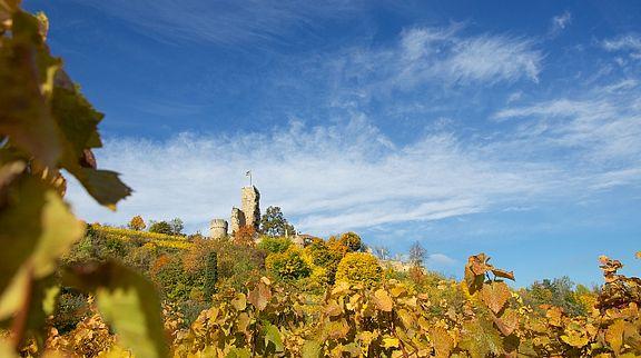 Castle ruin Wachtenburg
